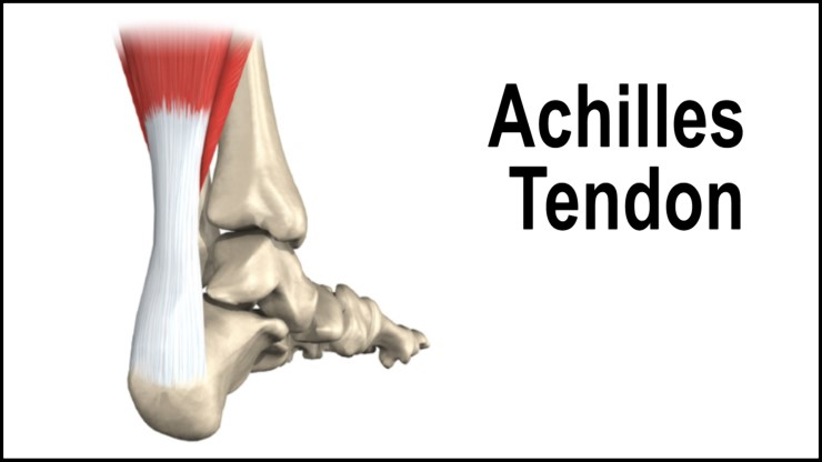 achilles tendon3